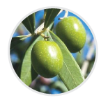 olive-info-circle.png